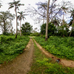 Jozani Forest, Zanzibar © vEcotourism.org / Ian Redmond