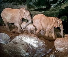 Kitum Cave, Kenya