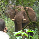 Ian-Redmond-filming-Nick-a-curious-elephant-in-Mt-Elgon-NP-Kenya.-Daniel-Namunai.-590x332