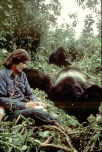 Dian Fossey takes notes on Group 5, 1977. Photo Ian Redmond (low res)